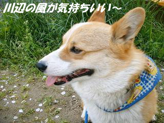 2007_0502画像0040