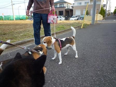 お散歩(6/3)2
