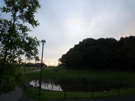 夕方のお散歩2(7/19)