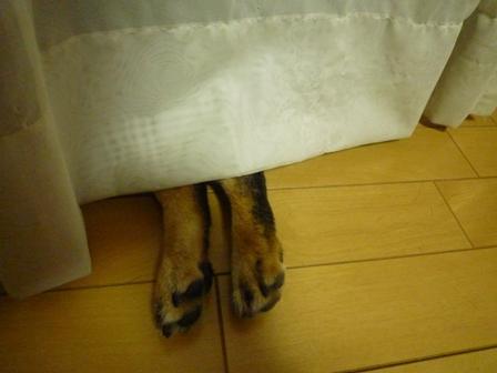 足が・・・・