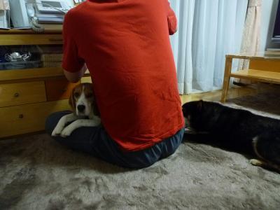 父ちゃんのお膝とwin