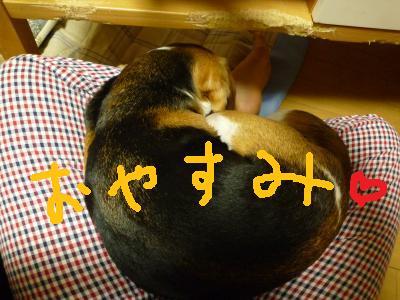 おやすみ☆