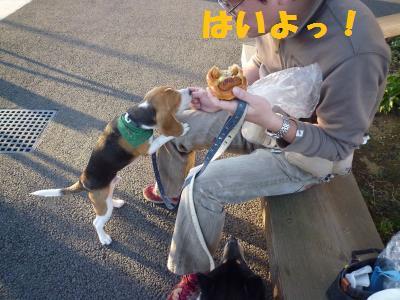 パン再び☆