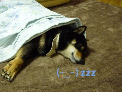 jotaも寝てる(-_-)zzz