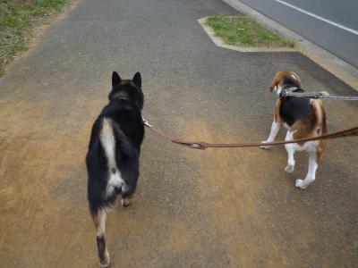 お散歩~♪