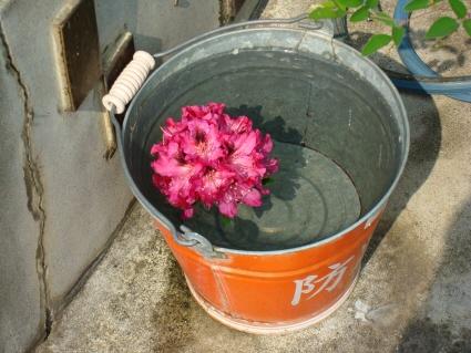 防火バケツの花
