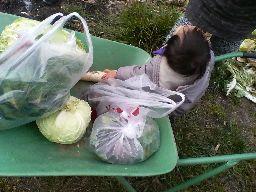 野菜だ~!!