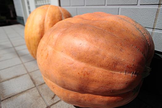 2011おばけかぼちゃ