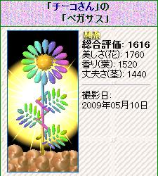 hana12.jpg