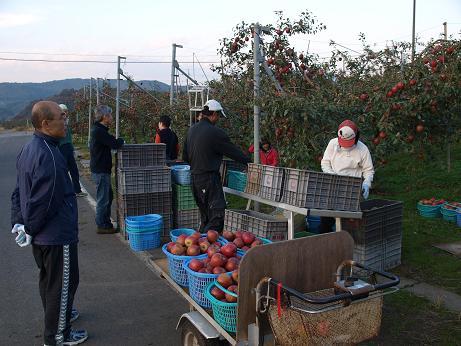 051 集めたリンゴ