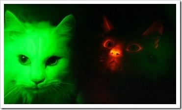 wwwkah_cat1