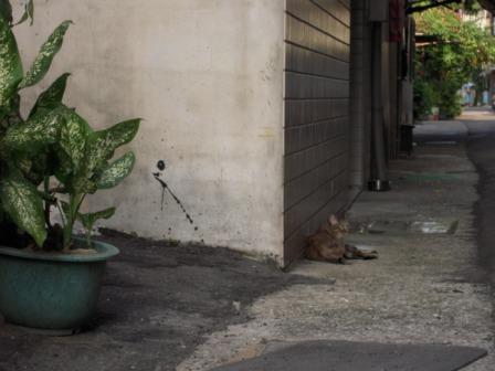 猫たちと散歩7