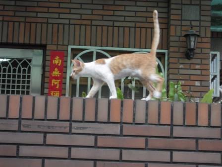 猫たちと散歩20