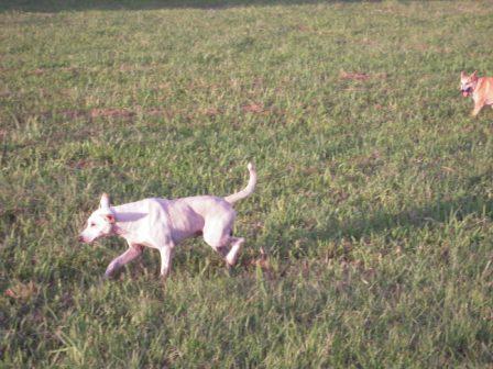 river park の 犬 3