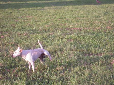 river park の 犬 4