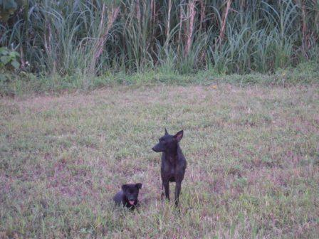 river park の 犬 9