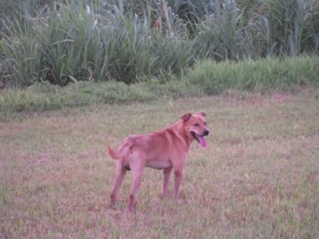 river park の 犬 11