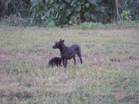river park の 犬 7