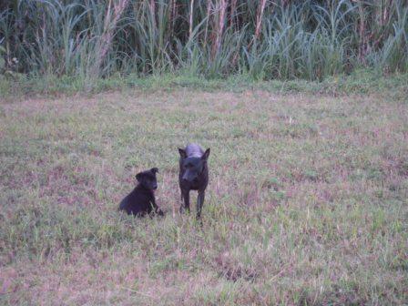river park の 犬 8