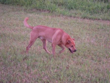 river park の 犬 10