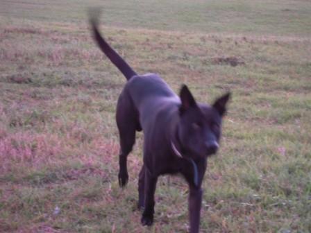 river park の 犬 14