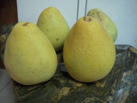 文旦柚 1