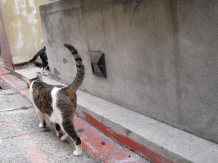 ネコ カフェ 3