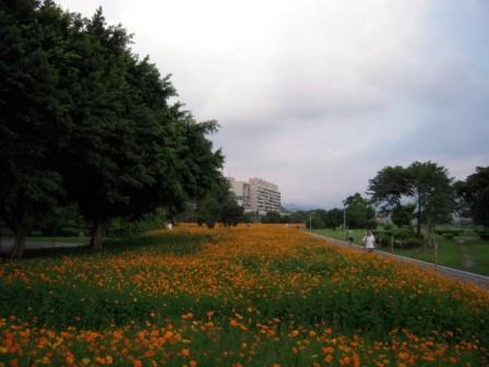 古亭河濱公園11