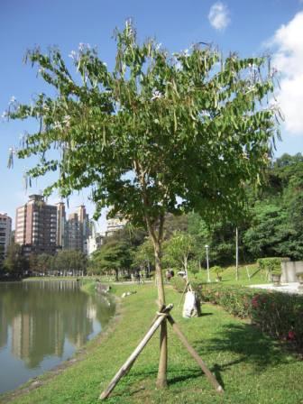 碧湖公園40