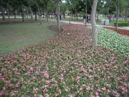 台北花卉展13