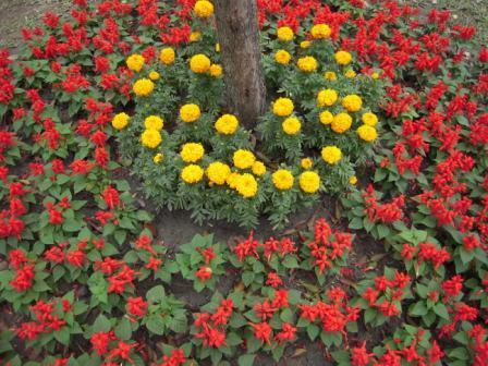 台北花卉展19