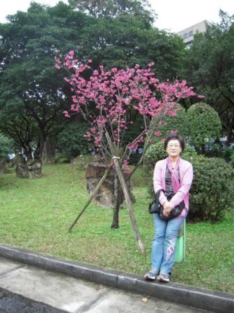 桜が咲いた3