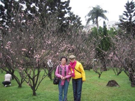 桜が咲いた12