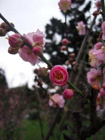 桜が咲いた16