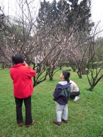 桜が咲いた17