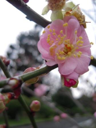 桜が咲いた14