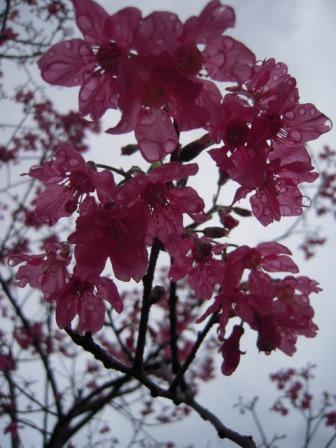 桜が咲いた19