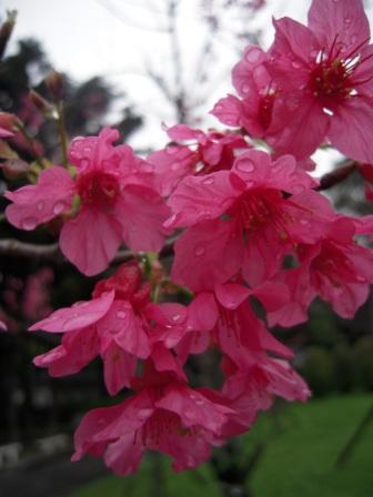 桜が咲いた22