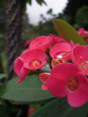 桜が咲いた33