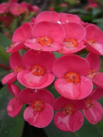 桜が咲いた32