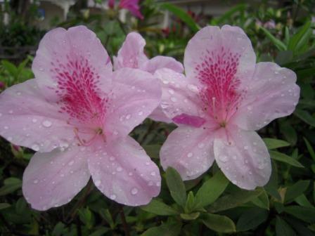 桜が咲いた56
