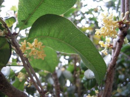桜が咲いた58