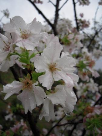 春節ー北投6