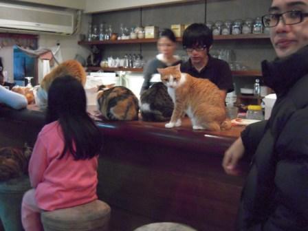 春節━猫カフェ13