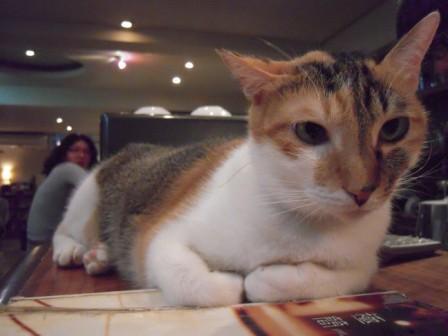 春節━猫カフェ20