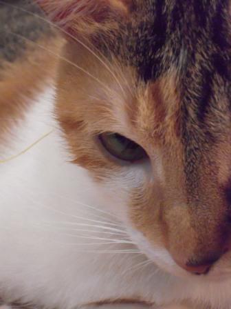春節━猫カフェ21