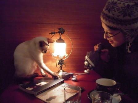 春節━猫カフェ35