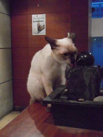 春節━猫カフェ32
