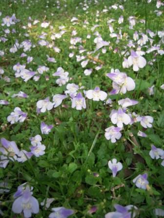 2010 陽明山花季12