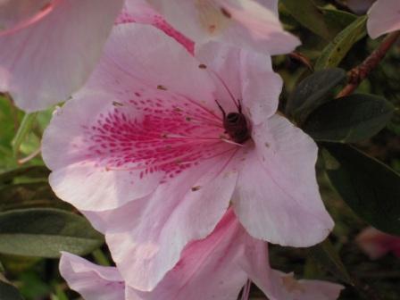 2010 陽明山花季11